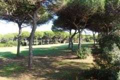 GolfNuevoPortil005