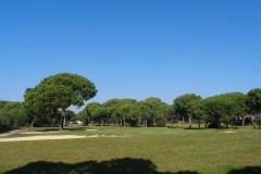 GolfNuevoPortil032
