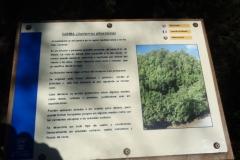 Sendero Botanico 03