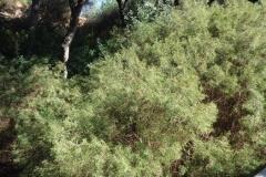 Sendero Botanico 04