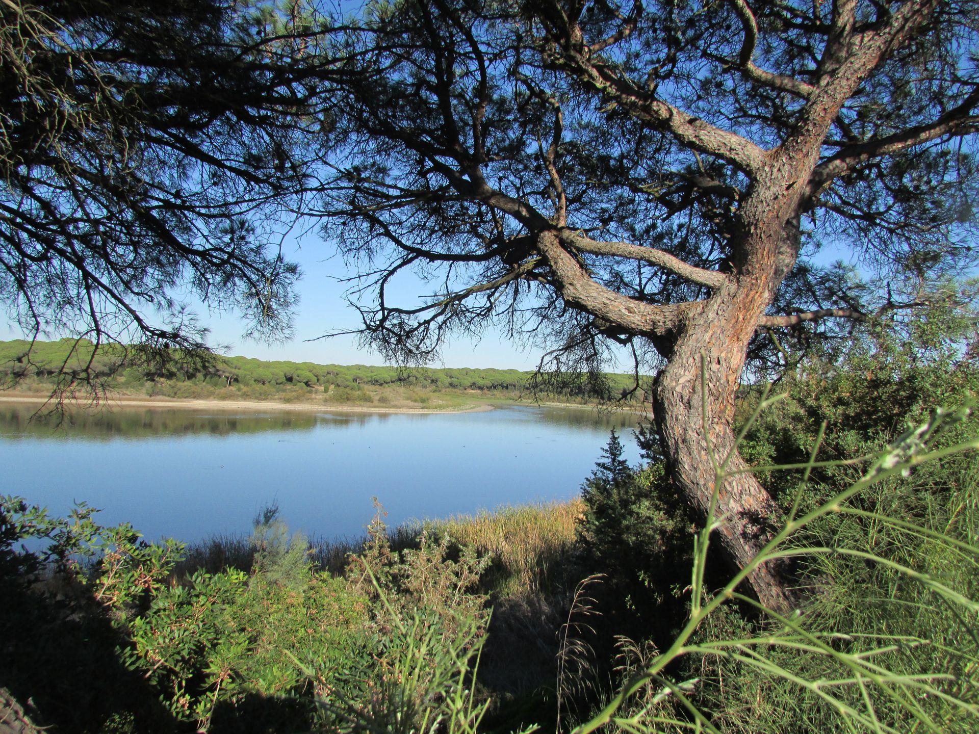 Flora Laguna El Portil